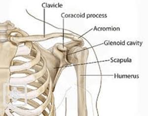5 Essential Components for Shoulder Health