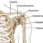 5 Essential Components for Shoulder Health